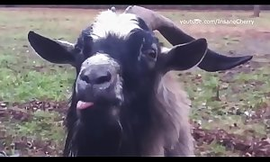 Skrillex &_ Damian Marley - Blow in Bun Dem (Animal Cover) [only unrefined sounds]
